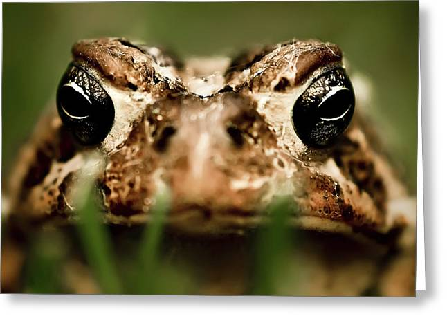 Toad In The Grass Greeting Card by  Onyonet  Photo Studios