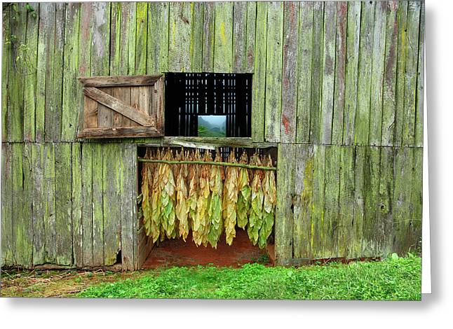 Tobacco Barn Greeting Card by Ron Morecraft
