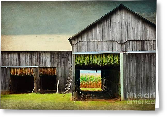 Tobacco Drying Greeting Card