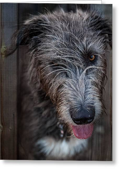 Toby, The Irish Wolfhound Pup Greeting Card