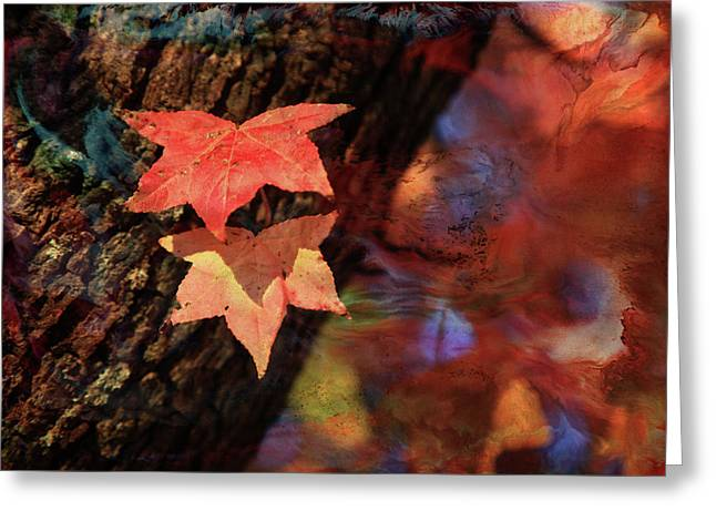 Greeting Card featuring the photograph Together II by Toni Hopper