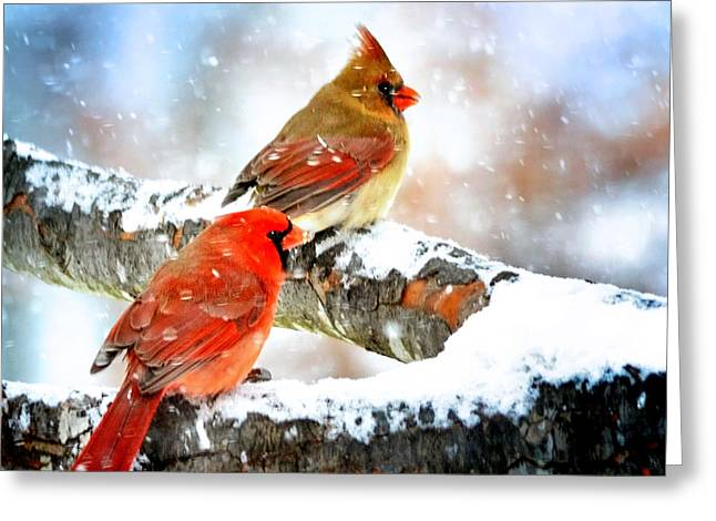 Together In The Snow Greeting Card by Nava Thompson