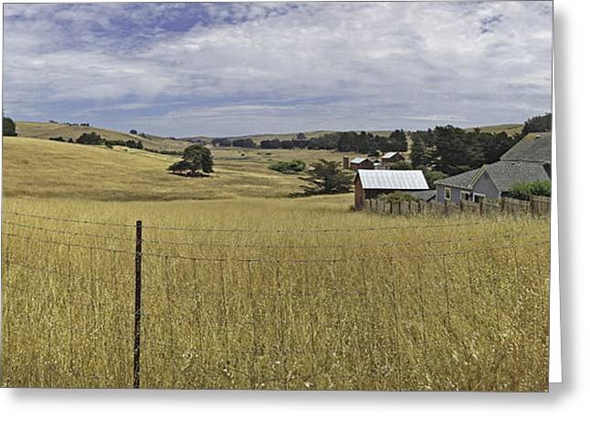 Tomales Study Greeting Card