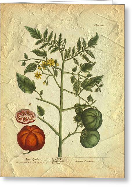 Tomato Plant Vintage Botanical Greeting Card