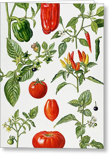 Chilli Greeting Cards - Tomatoes and related vegetables Greeting Card by Elizabeth Rice