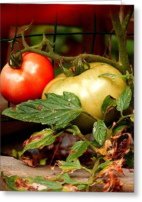 Tomatoes In Red N Green Greeting Card by Margie Avellino