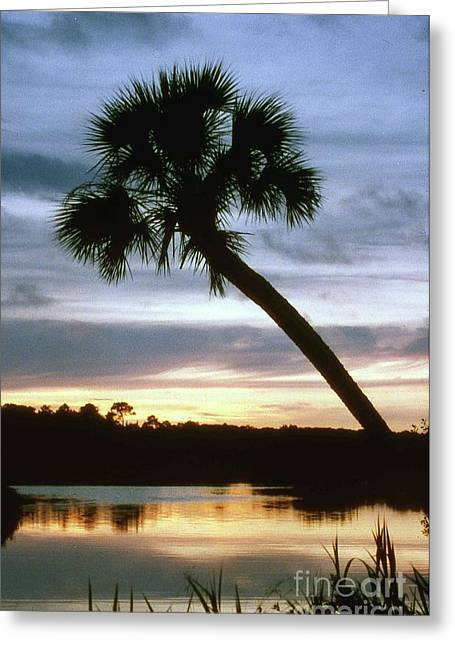 Tomoka River Sunset Greeting Card