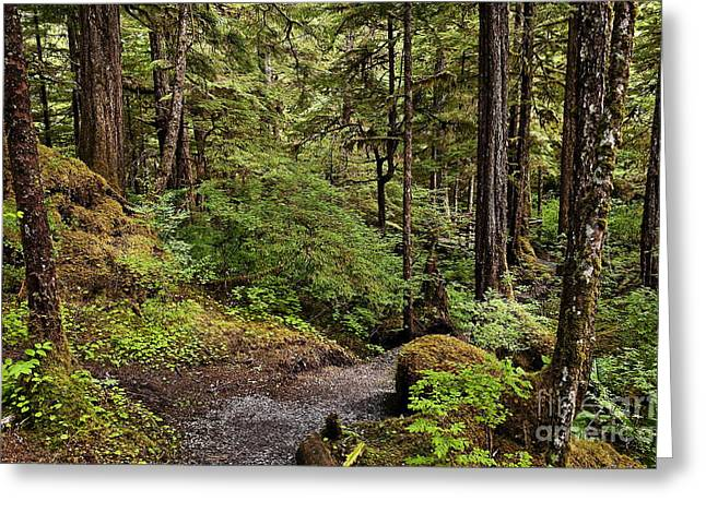 Tongass National Forest Greeting Card by John Greim