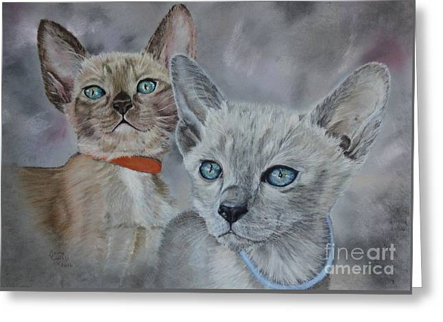 Tonkinese Kittens Greeting Card by Anne Cowell