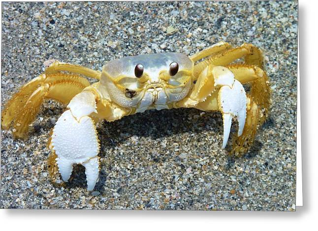 Too Cute To Be Crabby Greeting Card