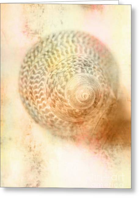 Top Down View Of Spiral Sea Shell Greeting Card by Jorgo Photography - Wall Art Gallery