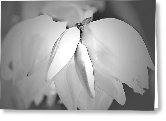 Top Of The Yucca Plant In Black And White Greeting Card