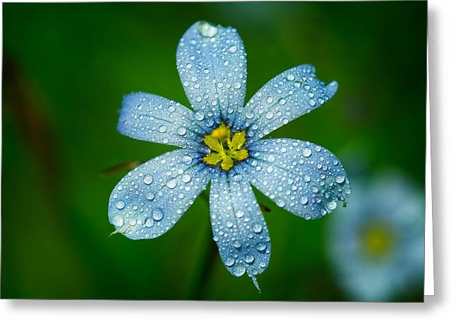 Top View Of A Blue Eyed Grass Flower Greeting Card