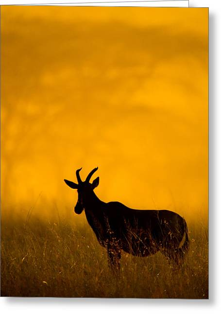 Topi Damaliscus Lunatus Standing Greeting Card by Panoramic Images