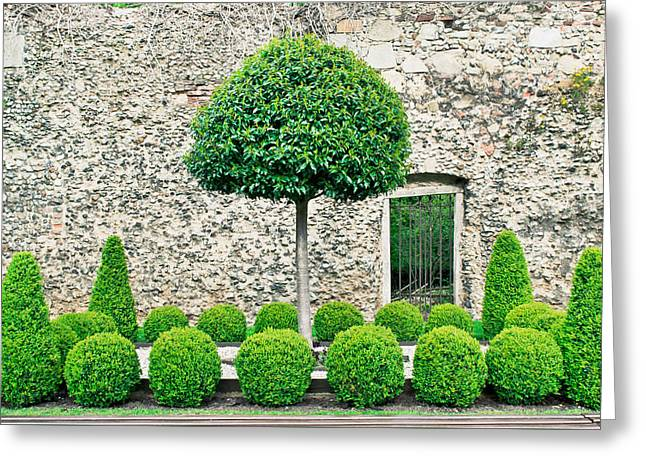 Topiary Tress Greeting Card by Tom Gowanlock