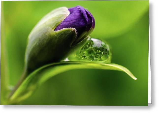 Topsy Turvy World In A Raindrop Greeting Card by Jordan Blackstone