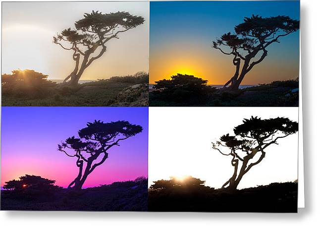 Torrey Pine Study Greeting Card by Peter Tellone