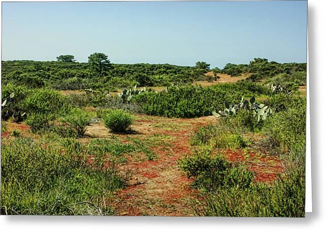 Torrey Pines California - Colourful Verdant And Arid Juxtaposition Greeting Card by Georgia Mizuleva