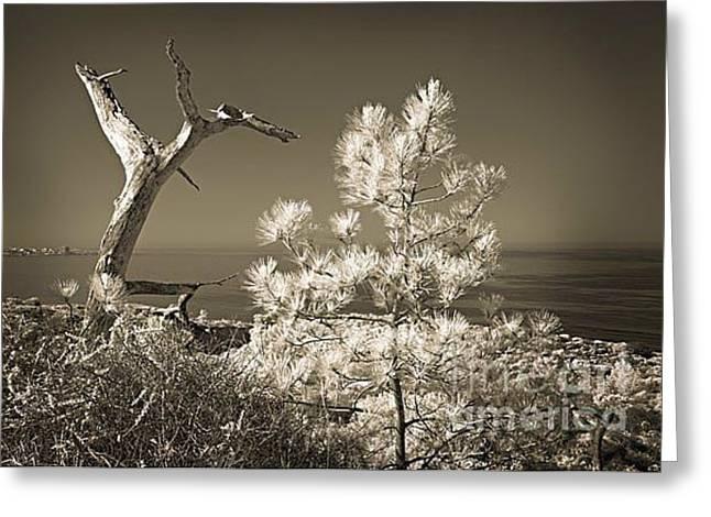 Torrey Pines Ocean View Greeting Card by Eileen Mandell