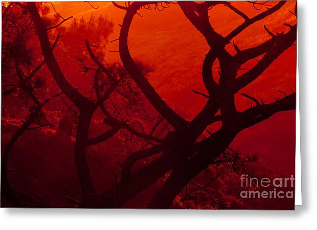 Torrey Pines Glow Greeting Card