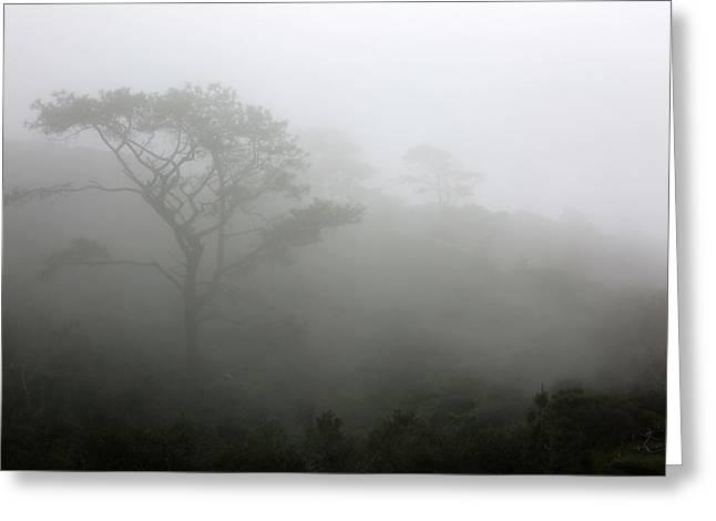 Torrey Pines With Coastal Fog Greeting Card by Robin Street-Morris