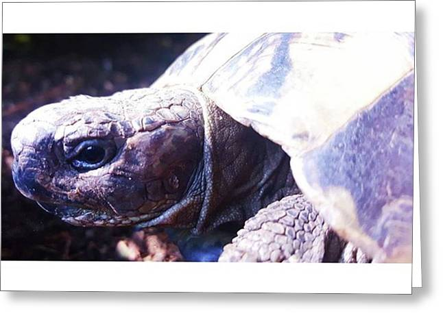 #tortoise #torts #sunbathing #basking Greeting Card by Natalie Anne