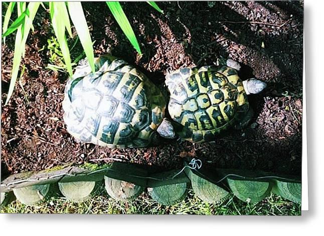#tortoise #torts #sunbathing #garden Greeting Card by Natalie Anne