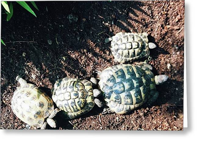 #torts #tortoise #sunbathing #shell Greeting Card by Natalie Anne