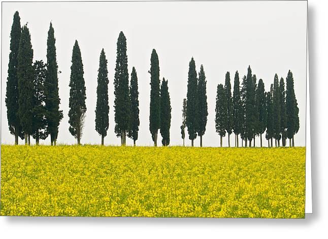 Toscana Cypresses Greeting Card by Igor Voljch