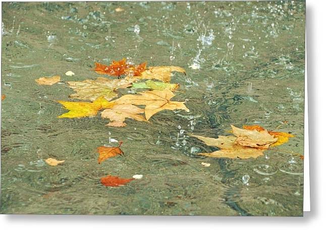 Tossed Leaves Greeting Card by JAMART Photography