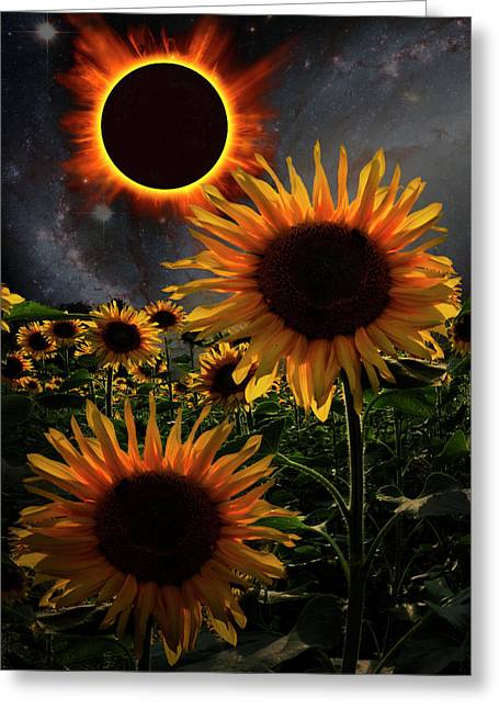 Total Eclipse Of The Sun Over The Sunflowers Greeting Card by Debra and Dave Vanderlaan