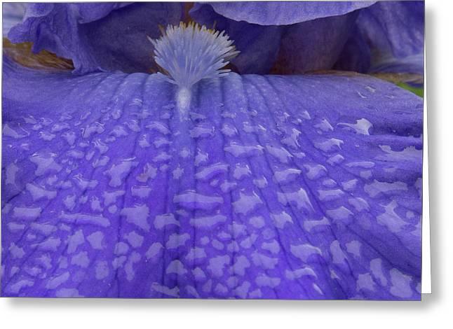 Totally Blue Iris Greeting Card