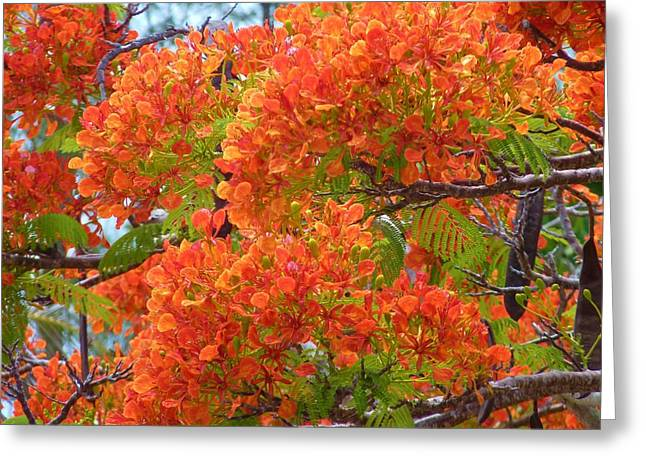 Totally Orange Greeting Card by Jeanette Oberholtzer