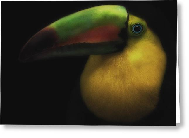 Toucan On Black Greeting Card