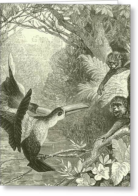 Toucans And Monkeys Greeting Card