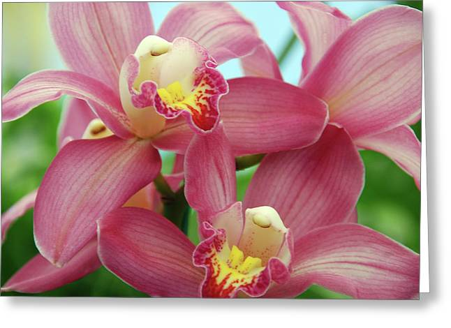 Garden Center Greeting Cards - Touch me Greeting Card by Susanne Van Hulst