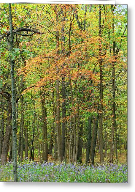 Touch Of Autumn Greeting Card by Cedric Hampton