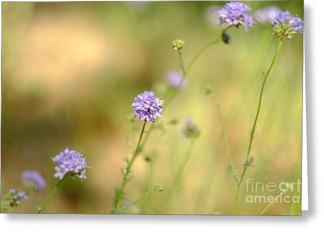 Touch Of Lavender Light Greeting Card