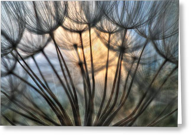 Touch Of Light Greeting Card by Iris Greenwell