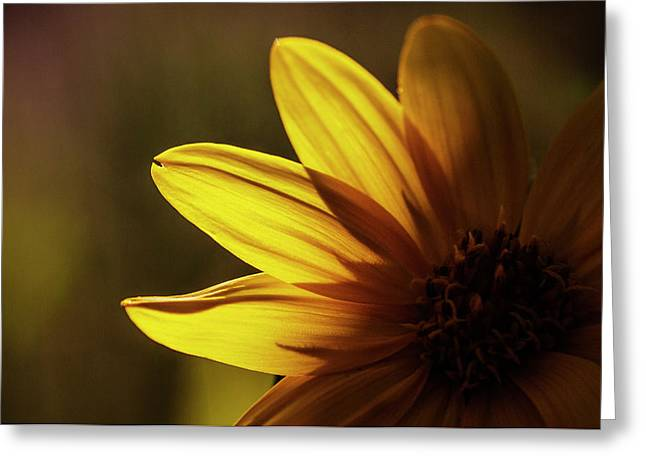 Touch Of Light On Sunflower Greeting Card by Vishwanath Bhat
