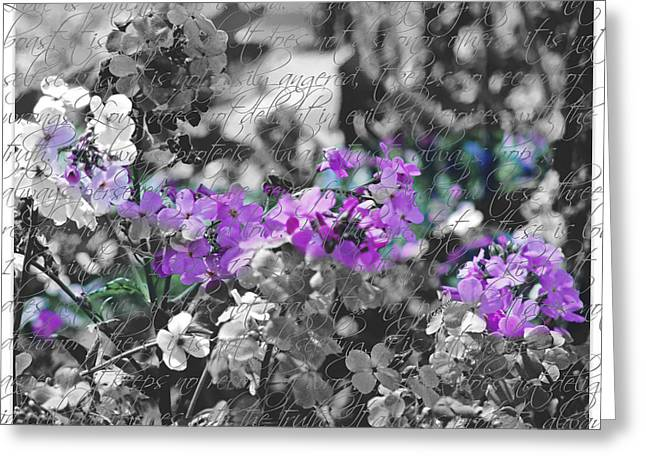 Touch Of Phlox Greeting Card