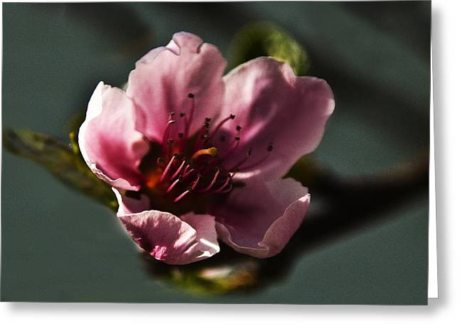 Greeting Card featuring the photograph Touch Of Spring by Kathleen Stephens
