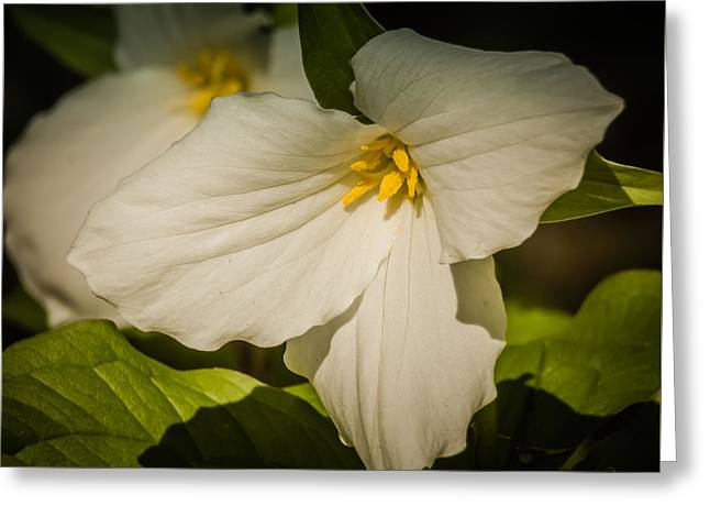 Touched By A Trillium Greeting Card