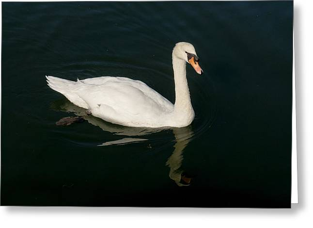 Tour De Swan. Un. Greeting Card by Elena Perelman