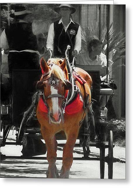 Tour Guide Greeting Card by Dressage Design
