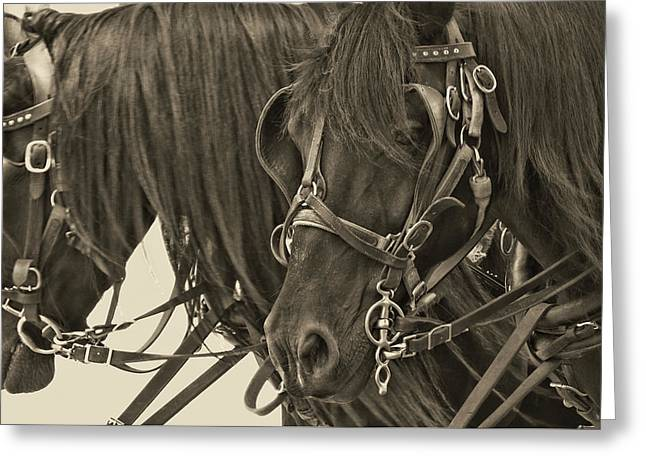 Tour Lexington Pair Greeting Card by JAMART Photography
