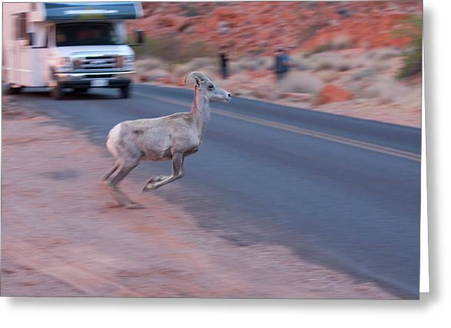 Tourists Intrusion In Nature Greeting Card