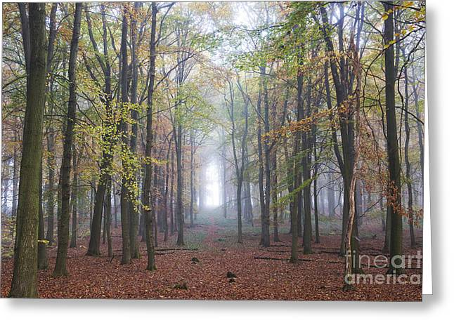 Towards The Light Greeting Card by Tim Gainey