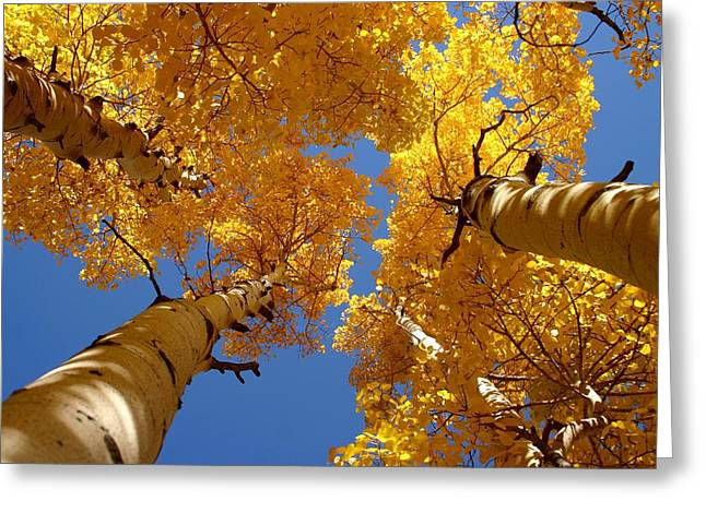 Towering Aspens Greeting Card