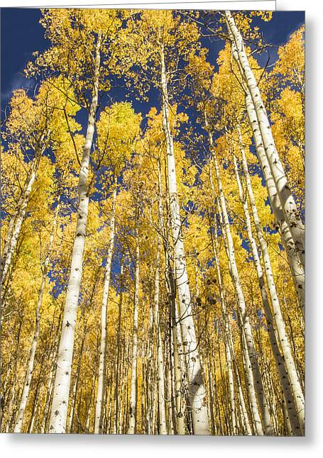Greeting Card featuring the photograph Towering Aspens by Phyllis Peterson